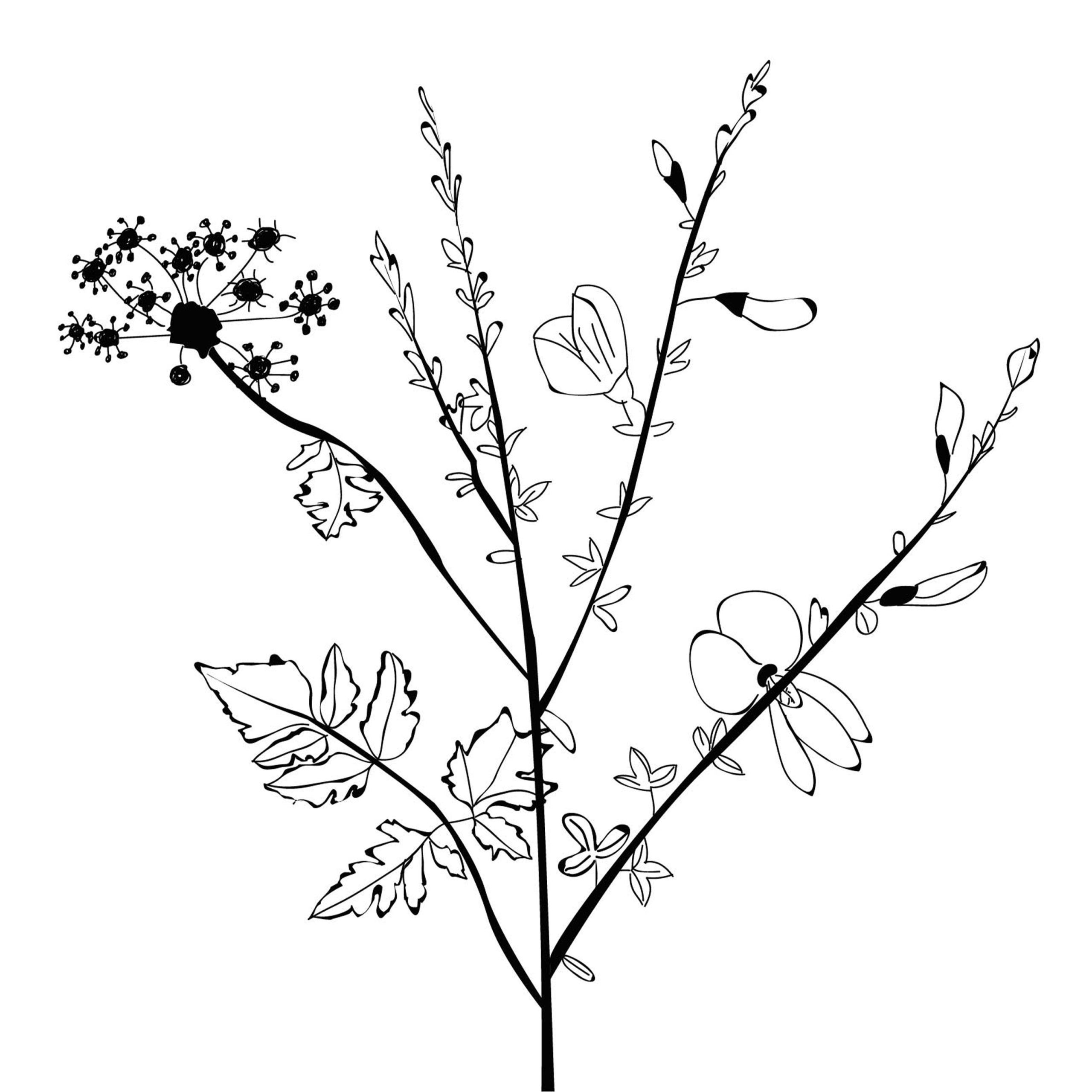 illustration-illustrator-fleurs